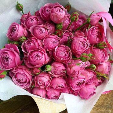 Peonies pink03