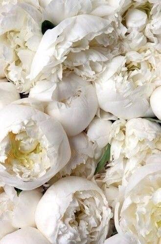 Peonies white2