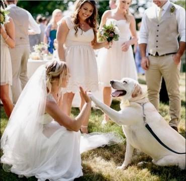 11 ok, hogy a kutyabolondok jó feleségek lesznek