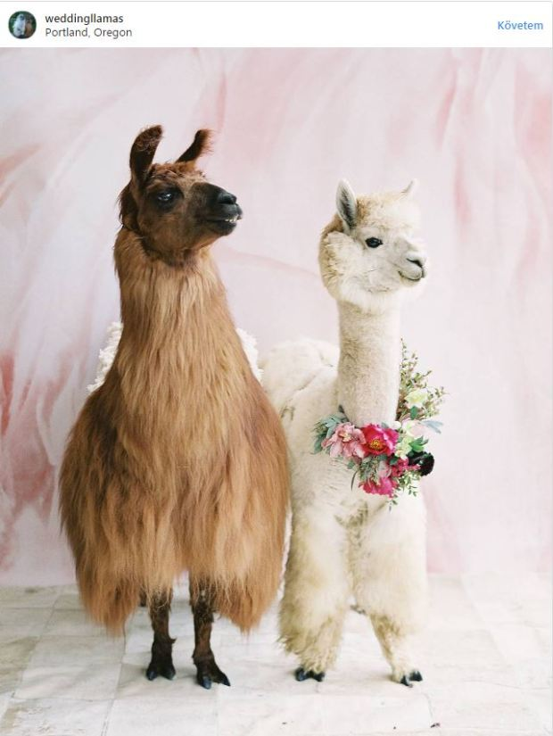 Llama & Alpaca