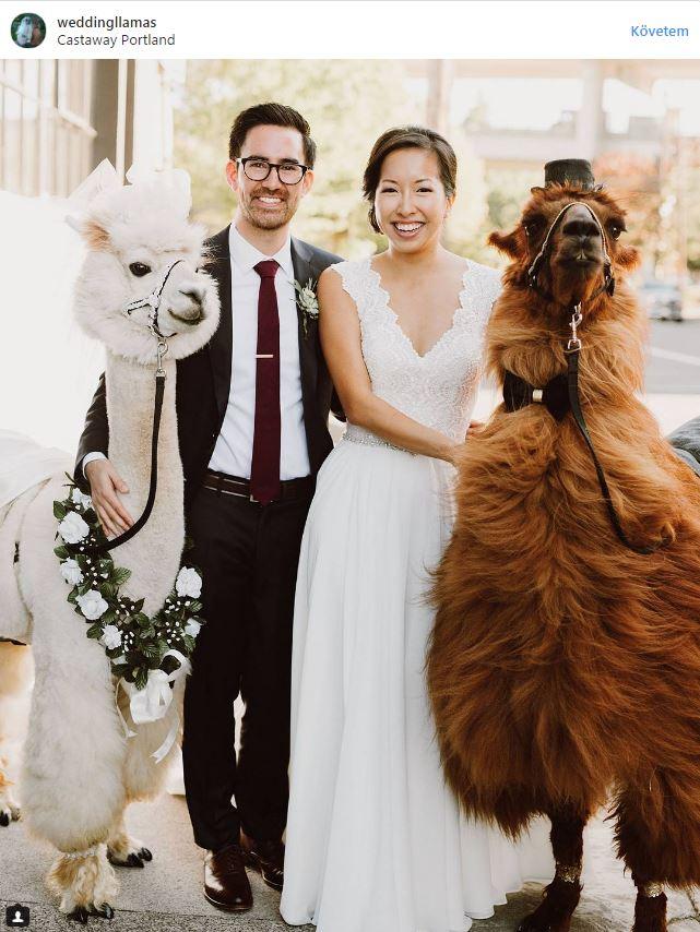 Llama Wedding01