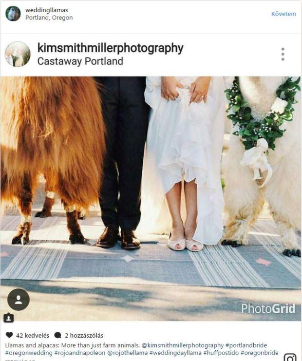Llama wedding02