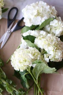 Hortenzia Hydrangea