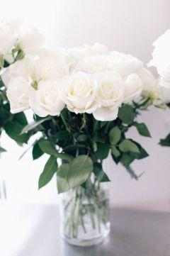 Rózsa Roses